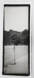 Baum VIII 2012 ca. 50x20cm  Handabzug, Silbergelatine auf Barytpapier